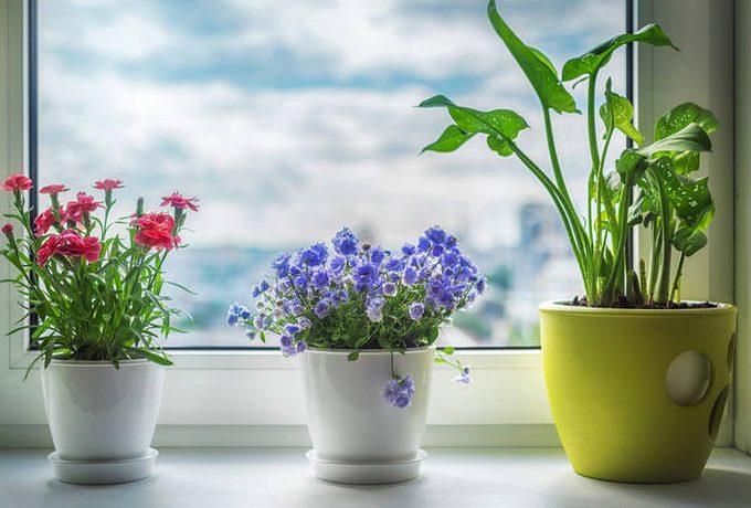 Комнатные растения - талисманы по знаку зодиака