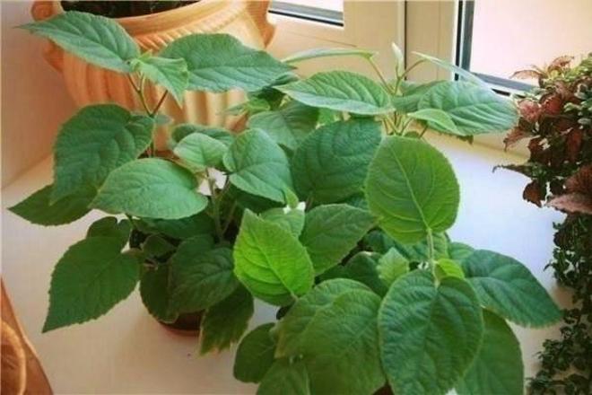 Сейчас лучшее время для посева киви! Как вырастить фрукт дома и на даче?