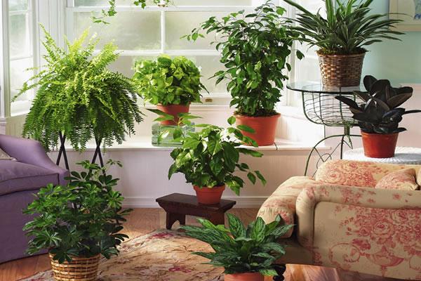 6 советов, как привлечь в дом счастье, любовь и достаток