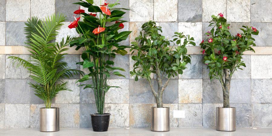 Женское здоровье и комнатные растения