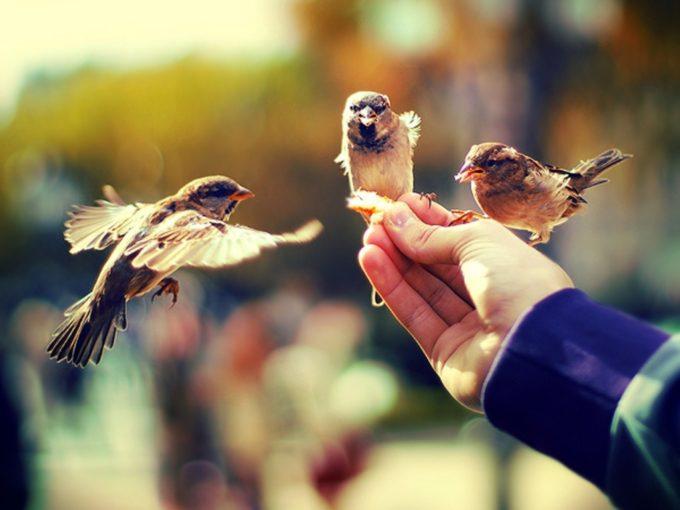 Любовь не может существовать там, где нет доверия