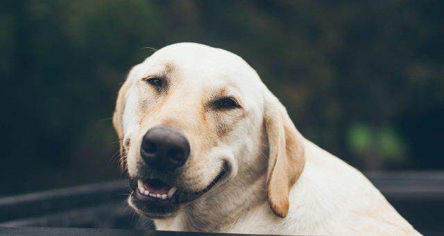 11 способов победить плохое настроение