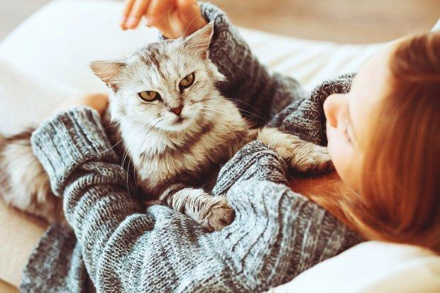 Психическое состояние хозяев передается котам: исследование ученых