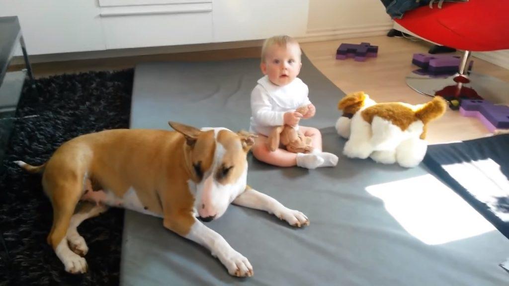 Ребёнок хватает и кусает бультерьера. Только посмотрите КАК на это отреагировала собака!