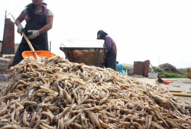 Фальшивые креветки: как подделывают морепродукты