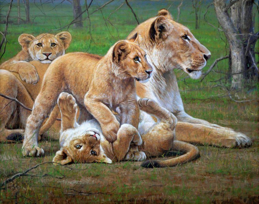 Львица защитила лисенка от голодного льва! Невероятный материнский инстинкт