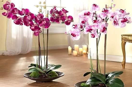 Орхидея в домашних условиях: приметы и суеверия. Орхидея-сильный женский талисман!
